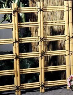 Bamboo fencing.                                                                                                                                                                                 More