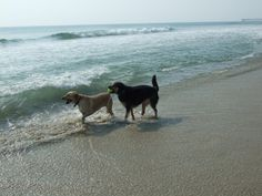 Playing fetch at the Outer Banks beach http://www.beachrealtync.com/outer-banks-pet-friendly-rentals.htm