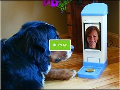 A Teenage Girl Invented Something To Help Her Dog Deal with Separation Anxiety!