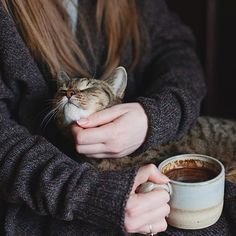 This photo is perfection.warm cozy sweater, hot cocoa and a soft, warm purring kitty Crazy Cat Lady, Crazy Cats, Michel De Montaigne, Photo Instagram, Pets, Cats And Kittens, Kitty Cats, Cute Cats, Fur Babies