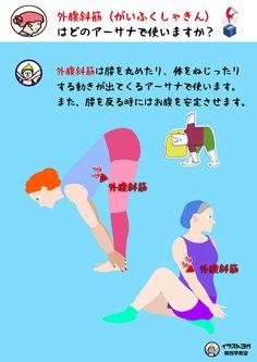 おはようございます。今日は外腹斜筋の  おさらいの日です。    もう一度、この筋肉を復習して  記憶を深めておきましょう。          まずはこの筋肉を横側から  見てみましょう。    起始は、肋骨(5~12番目)の外側 停止は、骨盤とお腹 です。