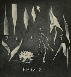 "Drawing leaves in reverse - adding light chalk to a blackboard. From the public domain ebook, ""Blackboard Drawing"". Before the Internet, before TV, before radio, folks used to go to talks. One way the talks were made more dynamic was thru chalkboard sketches the speaker would create thru the lecture. Download this ebook in epub, kindle or pdf format here:  https://archive.org/stream/blackboarddrawin00whitrich"