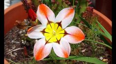 flores cheias de cor.....