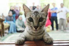 20 vezes em que gatos estragaram fotos que seriam perfeitas - Page 3 of 4 - ÓtiMundo!