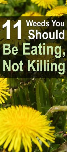Although most people see weeds as a nuisance, there are certain so-called �weeds� that are not only edible but also quite nutritious and sustaining.