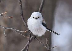 身近な鳥たちと親しくなろう新しい趣味 バードウォッチングを始めてみない