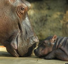 These Incredible Photos Prove That True Love Does Exist. Animals have so many emotions too!
