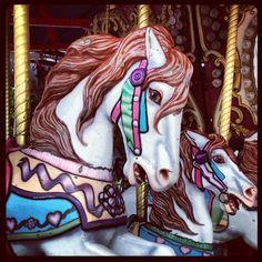 """""""Wild"""" horses at the Ohio State Fair"""