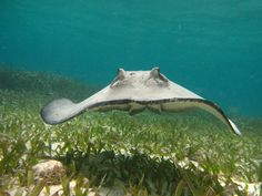 Unique Dive Adventures – Offering you the best in peronsalized trips in Belize.