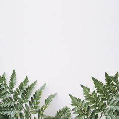 Discover thousands of free stock photos on Freepik White Background Wallpaper, Peach Background, Snowflake Background, Brick Wall Background, Flower Wallpaper, Background Patterns, Blog Backgrounds, Flower Backgrounds, Wallpaper Backgrounds