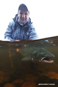 Yokanga Salmon. UW shot, july 2013. TL, AOS Fly Fishing Team  http://www.aos.cc/travel-flyfishing/yokanga-russland  #Salmon #flyfishing #russia #yokanga #Simmsfishing #Looptackle