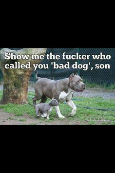 Bad dog...I think not.