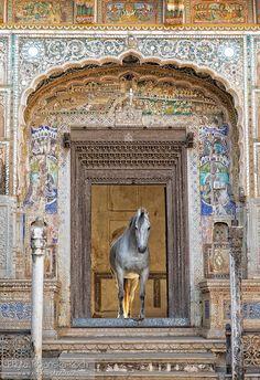 Marwari mare in Mandawa haveli - Marwari mare standing in the door of Mandawa haveli