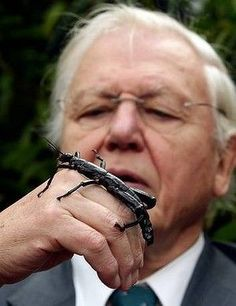 David Attenborough at Melbourne Zoo with a Lord Howe Island Stick Insect.Sir David Attenborough at Melbourne Zoo with a Lord Howe Island Stick Insect. Melbourne Zoo, Brisbane, Saltwater Crocodile, Australia Tourism, Coral Garden, David Attenborough, Cattle Farming, Airlie Beach, Great Barrier Reef