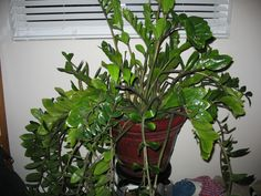 i love house plants this plant of many house plants house plantsmy
