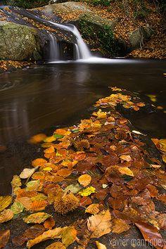 Landscape, Flavors of Fall Creek in Santa Fe Montseny Natural Park