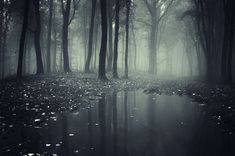 Dark spooky forest with mysterious fog and lake. Dark spooky eerie forest with m , Forest Wallpaper, Dark Wallpaper, Nature Wallpaper, Wallpaper Gallery, Rainy Wallpaper, Wallpaper Wallpapers, 2560x1440 Wallpaper, Forest Background, Landscape Wallpaper