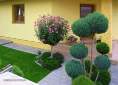 See related links to what you are looking for. Buxus, Backyard, Patio, Garden Planning, Bonsai, Home And Garden, Gardening, Landscape, Outdoor Decor