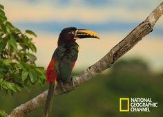 Você está preparado para conhecer o Brasil Secreto, Pantanal?  Brasil Secreto, Pantanal. #NatGeo Confira conteúdo exclusivo no www.foxplay.com