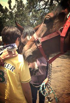 El mejor lugar para que todo niño o adolescente sane y equilibre sus emociones: Centro Terapéutico Equino Sin Cera Ser! www.sinceraser.org abraza@sinceraser.org FB: Sin Cera Ser A.C.
