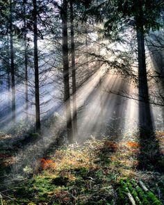 Chasser la lumiere dans la forêt de Saint-Pierre-Cherignat.  #saintpierrecherignat #creuse #limousin #igerslimousin #lumiere #light #wood #foret #tree #arbre