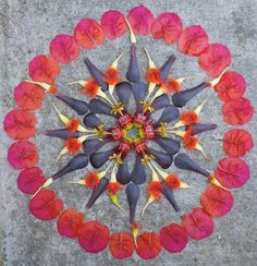 Art & Botany: Flower Mandalas | Garden Design  http://www.metacafe.com/watch/yt-FXTHLk4izCg/allsaints/