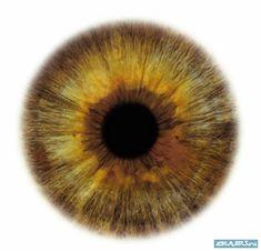 pictures of eyeball iris - Bing Images Zbrush, Eye Color Chart, Eye Texture, Iris Eye, Realistic Eye Drawing, Halloween Eyes, Fotografia Macro, Human Eye, Eye Photography