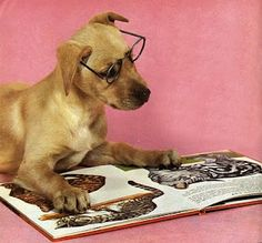 dog reading about cats