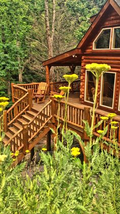Recent rains have the wild flowers around the cabin in full bloom. #highrockrentals #vacationrental