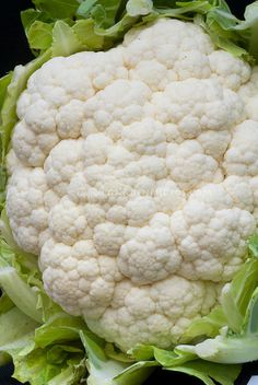 Cauliflower vegetable, Brassica cool weather crop, picked, showing head and florets closeup
