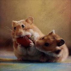Hamsters *-*