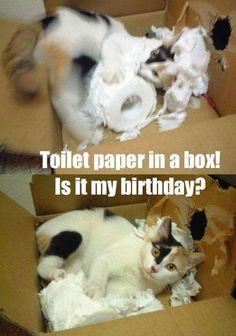 Toiler Paper In A Box