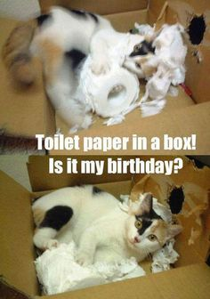 Toiler Paper In A Box