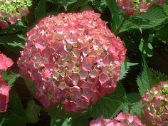 Beautiful Fall Wedding Flower Ideas Photo