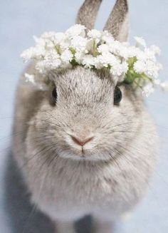 Here comes the Bunny Bride