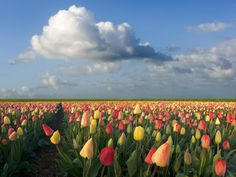 Pics of Glory of God | God's glory in the flowers of the field.