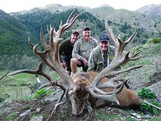 Spey Creek Trophy Hunting New Zealand Red Stag Elk Hunts Kaikoura Lodge Deer Hunt Trophies Bow Rifle Dream hunt just waiting on my wife to say GO:))))))))))))))))))