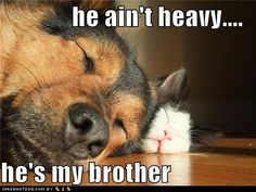 Dog sleeping on cat :: he ain't heavy...he's my brother