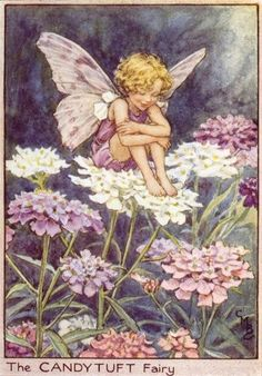 """Candytuft Flower Fairy Cicely Mary Barker, Illustrator from her book, """"Flower Fairies of the Summer"""", 1925 Cicely Mary Barker, Flower Fairies, Fairy Dust, Fairy Tales, Fairy Pictures, Vintage Fairies, Love Fairy, Beautiful Fairies, Art And Illustration"""