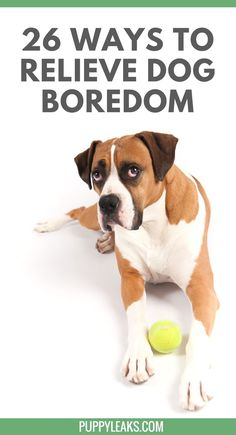 Is your dog bored? Here's 26 Quick Ways to Keep Your Dog Busy. @KaufmannsPuppy