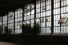 Old factory windows. Reminds me of my art building at UB.