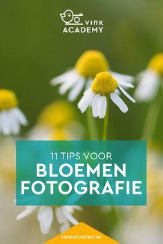 Bloemen fotograferen: 11 tips • Vink Academy
