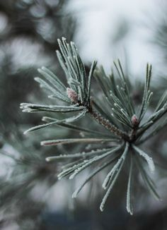 Christmas Decor by Mother Nature | Content in a Cottage