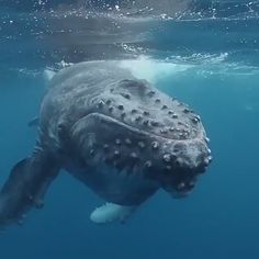 Images Of Marine Life Being Suffocated Highlight The Problem Of Plastics In The Ocean Nature Animals, Animals And Pets, Baby Animals, Funny Animals, Cute Animals, Strange Animals, Beautiful Sea Creatures, Animals Beautiful, Beautiful Ocean