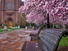 My memories of Washington DC are the Cherry Blosson Parade, the Smithsonian museums, especially the History Museum and the post office tower and the memorials  -Smithsonian Gardens in Washington DC