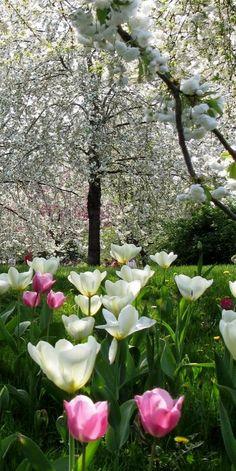 Spring flowers tulips beautiful landscape!
