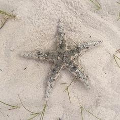 #naturalbeauty Fisher, Star Wars, July 31, French Brands, Starfish, Bikinis, Swimwear, Natural Beauty, Instagram