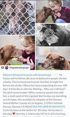 RESCUED ❤️❤️❤️ BY KARMA RESCUE❤️ 1/3/17 PLEASE SHARE CYNIC !! AT DOWNEY CA !! WAITED SINCE SEPTEMBER 2016! HE'S GIVING UP HOPE!! /ij http://instami.com/tag/A4995572