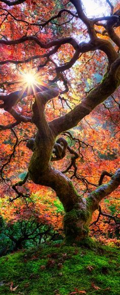 Fall at the Japanese Garden in Portland, Oregon. / 20 Landscape Photos Cropped for Pinterest / sun shining through the trees