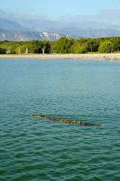 Lake Enriquillo (Spanish: Lago Enriquillo) is a salt lake in the Dominican Republic and is the largest lake and lowest point in the Caribbean and the lowest point on any ocean island. Not a place to go swimming as you can see ... a crocodile is waiting for you